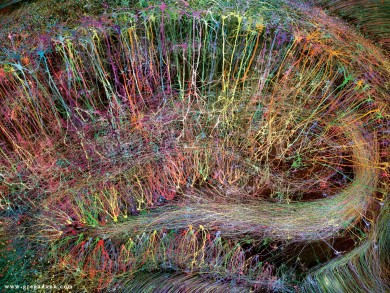 Brainbow Hippocampus rainbow colors by Greg Dunn