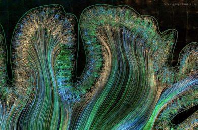 motor-and-parietal-cortex