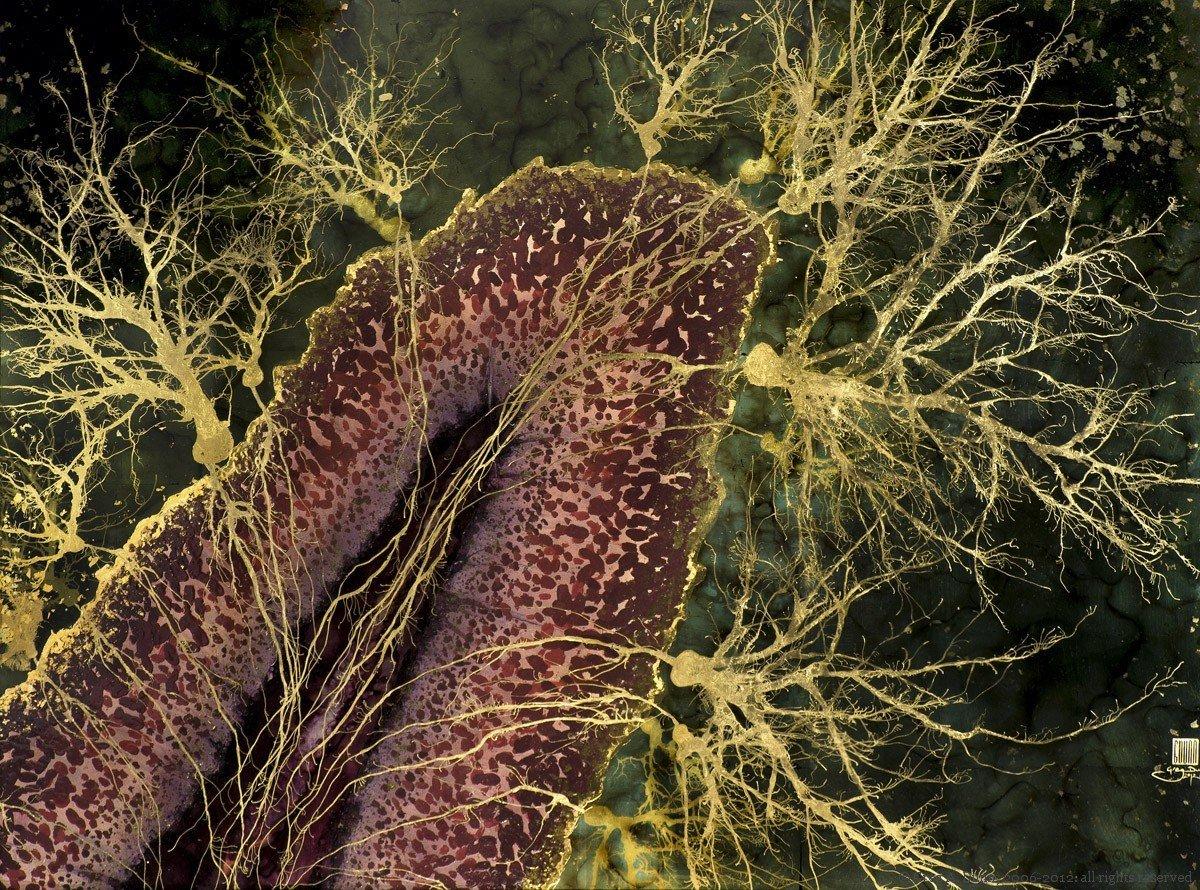 Cerebellar Lobe
