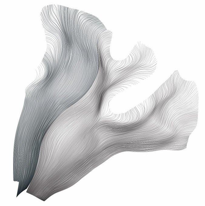 drawn-white-matter-tracks
