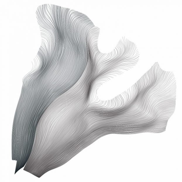 drawn white matter tracks