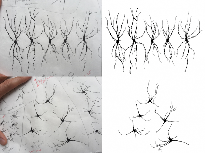 neuron painting