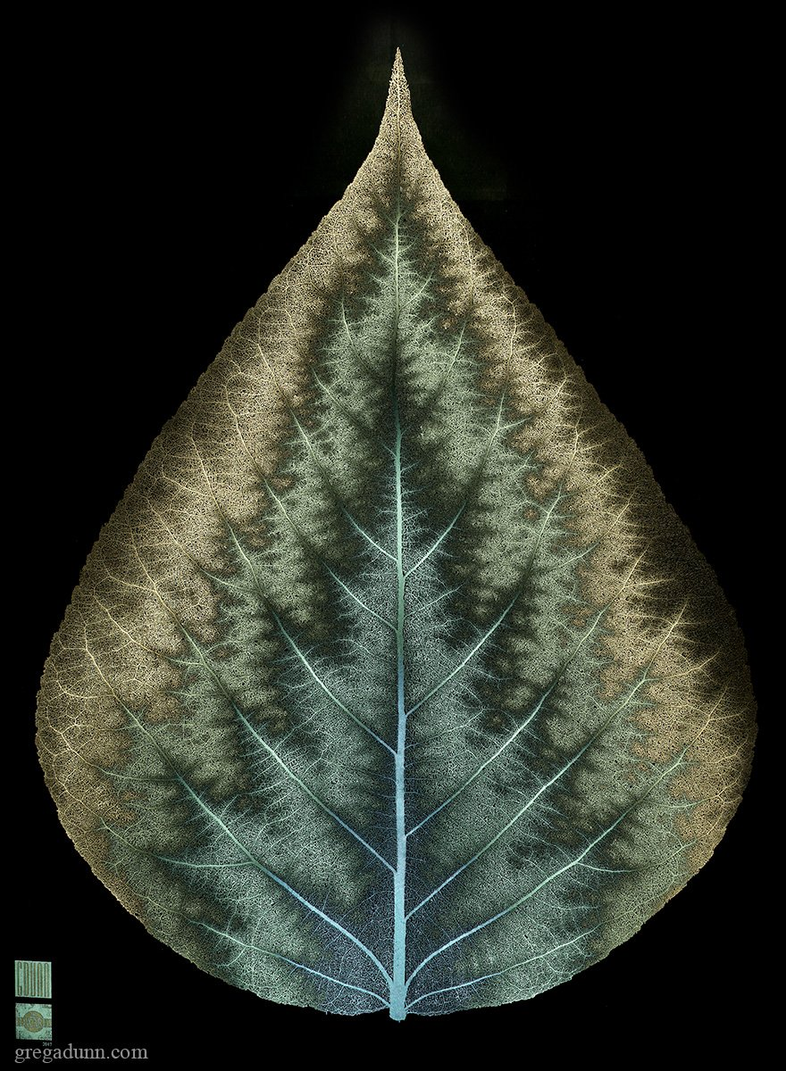 Photosynthesis microetching